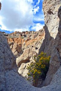 Mojave Wander 045