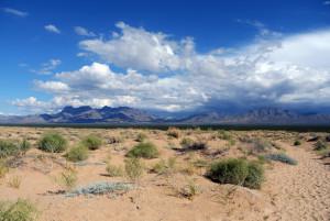 Mojave Wander 062